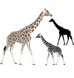 walking giraffe vector image