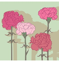 carnations vector image vector image