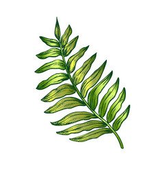 areca palm tropical exotic leaf color hand drawn vector image