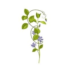 Bindweed Wild Flower Hand Drawn Detailed vector