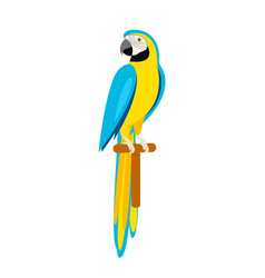 Cartoon cute parrot beautiful ara parrot vector