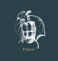 pepper sketch drawn spice herb botanical vector image