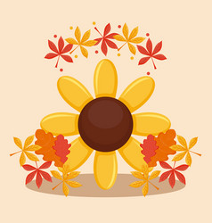 Sunflower with leafs of thanksgiving day vector