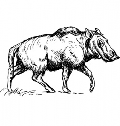 Wild boar illustration vector