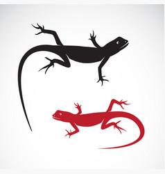 chameleon on white background reptile animals vector image