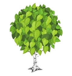 Birch tree with lush green foliage vector