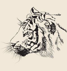 black and white banner with a realistic tiger head vector image