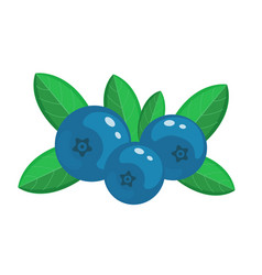 blueberry isolated on whit vector image