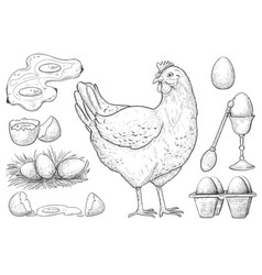 hen with egg and farm foodstuff production sketch vector image