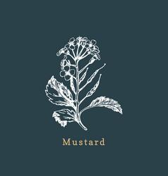 Mustard sketchdrawn spicemedicinal herb vector