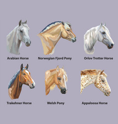 Set of portraits of horses breeds vector