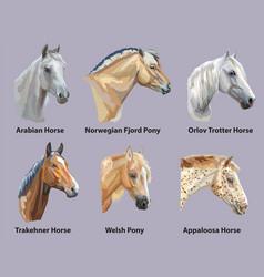 set of portraits of horses breeds vector image