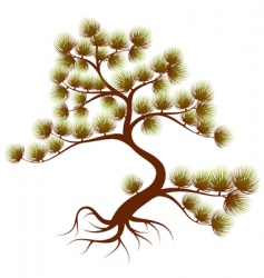 Tree cedar vector