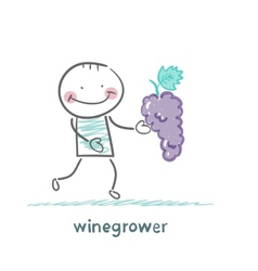 Winegrower holds a bunch of grapes vector
