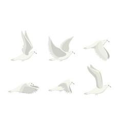 cartoon white dove bird set vector image