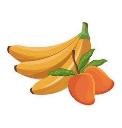 Banana and mango fruit tropical food vector