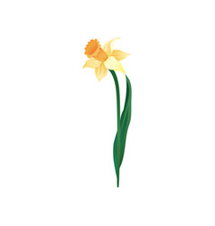 Icon blooming narcissus with yellow vector