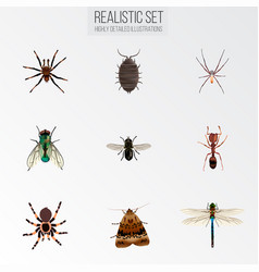 set of bug realistic symbols with ant wasp fly vector image