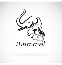 mammal group design on white background elephant vector image