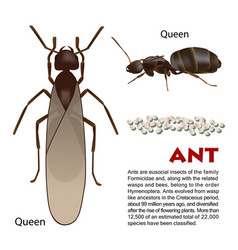 Real ant insect vector