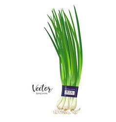 Spring onions fresh one pack design isolated vector