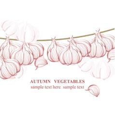 Vintage garlic background line art graphic vector