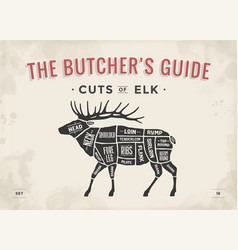 butcher diagram scheme - elk vector image