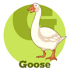 abc cartoon goose vector image
