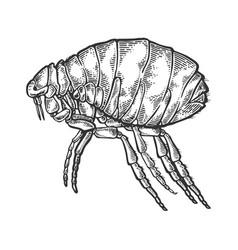 Flea insect parasite engraving vector