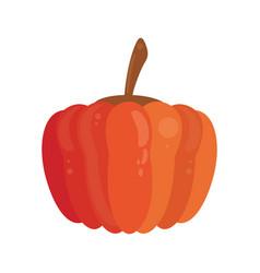 pumpkin food healthy image vector image