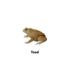 Toad with shadow on a white background vector