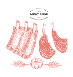 Vintage meat hand drawn ribs spices and herbs vector