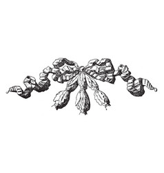 Wrinkled ribbon and knot is a louis xvi style vector