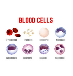 blood cells poster vector image
