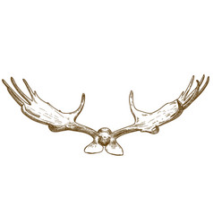 engraving megaloceros antlers vector image