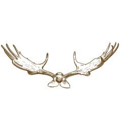 engraving of megaloceros antlers vector image