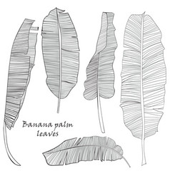set of silhouette tropical banana palm leaves vector image vector image