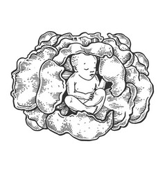 Baby in cabbage engraving vector