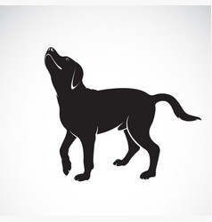 Dog labrador on white background pet animals vector