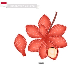 Fresh Salak A Famous Fruit in Indonesian vector image vector image