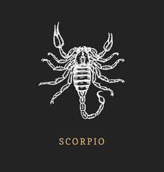 scorpio zodiac symbol hand drawn in engraving vector image