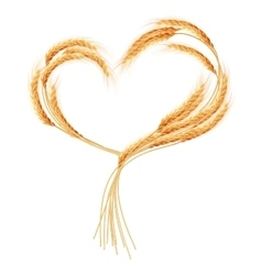 Wheat ears Heart isolated on the white EPS 10 vector image