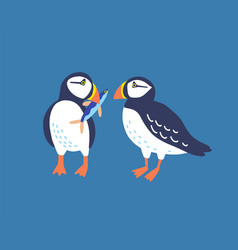 atlantic puffins flat north vector image
