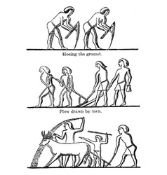 Sculptures on a theban tomb have early tool for vector