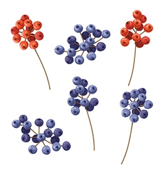 Berry color vector