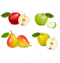 group with apples and pears vector image vector image