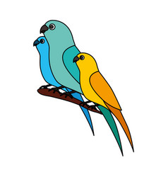 Canary and parrots birds on branch vector