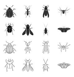 isolated object of insect and fly logo set of vector image