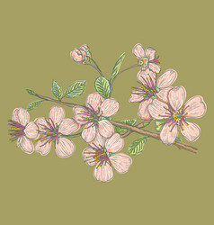 pink sakura on green background vector image
