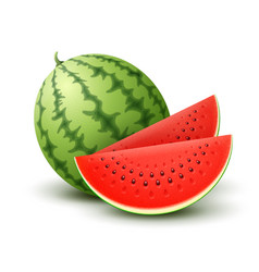 Realistic watermelon vector